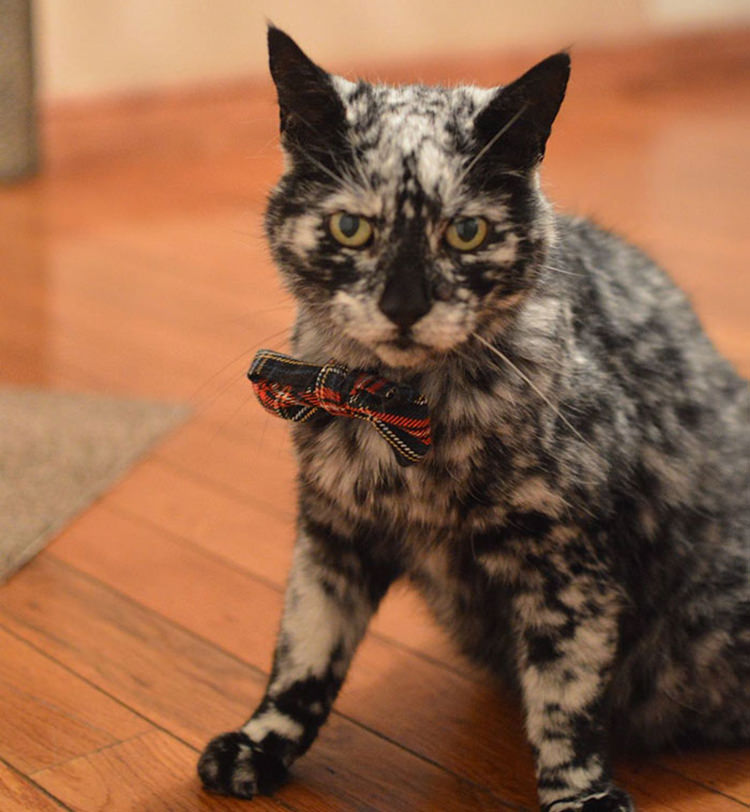 19-year-old-cat-marble-fur-9