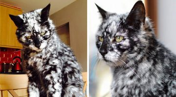 19-Year-Old Cat Turns Into a Marble Beauty Due To Rare Skin Condition