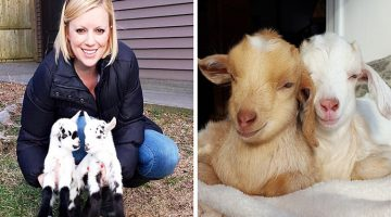 Woman Quits Stressful Job In NYC To Raise Baby Goats With Special Needs