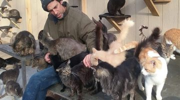 Man Creates Cat Sanctuary For Over 300 Cats In Honor Of His Son