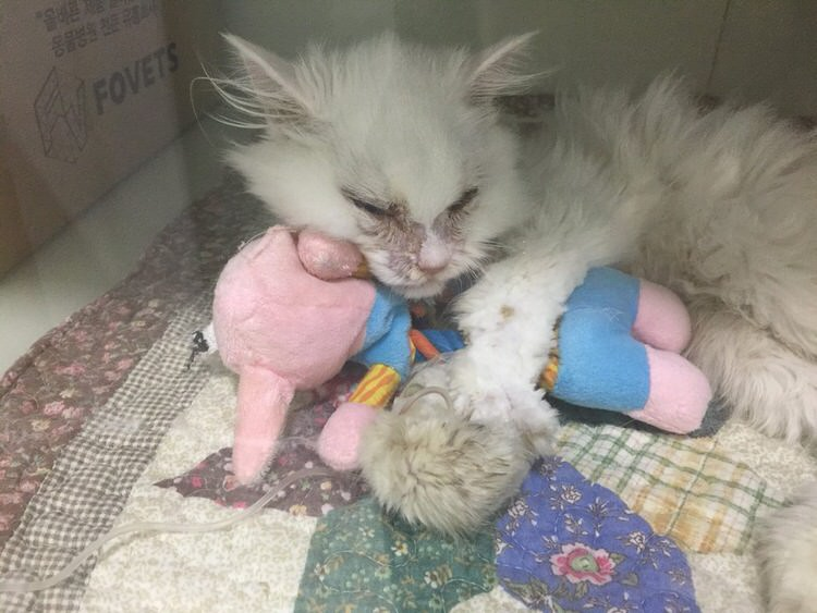 jon-snow-sick-cat-rescued-1
