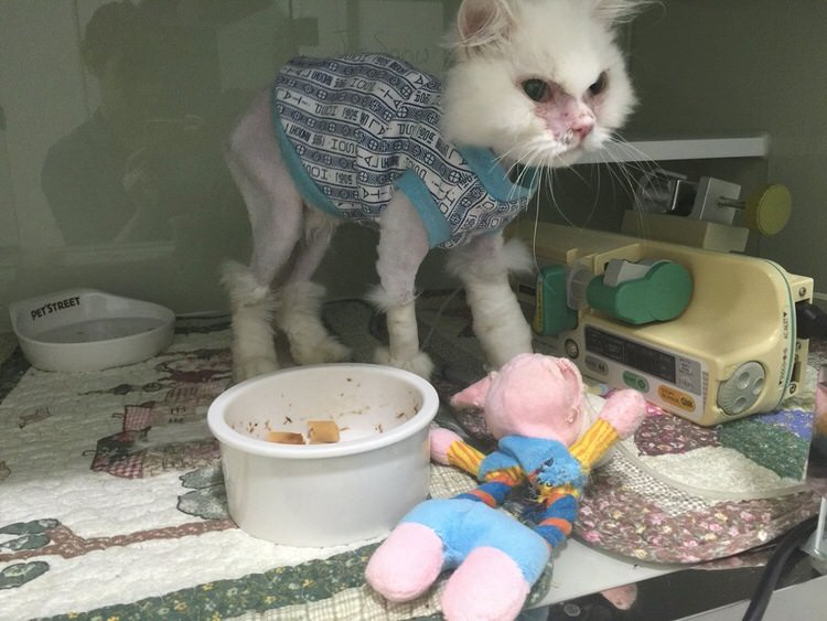 jon-snow-sick-cat-rescued-4