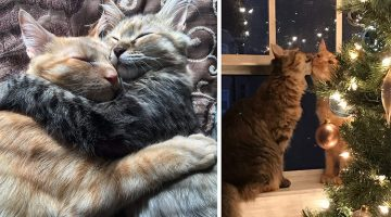 These Kittens Are Totally In Love And The Internet Is Going Crazy About Them