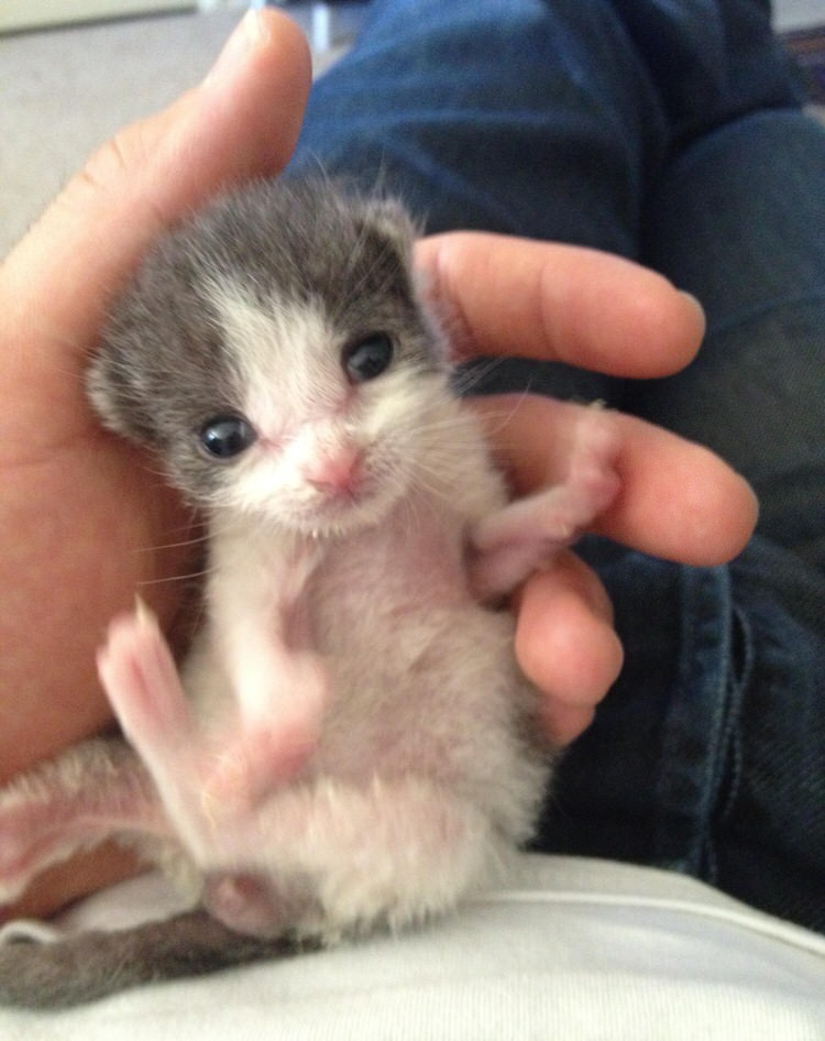 orphaned-kitten-rescued-backyard-3