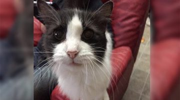 Kind Woman Rescues 15-Year-Old Cat Abandoned At Vet's Office. He Can't Stop Thanking Her