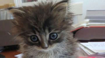Teeny Bundle of Joy Delivered by Stray Cat