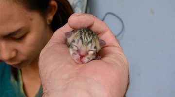 Family Finds Tiniest Kitten In Street. But He Isn't What He Seems