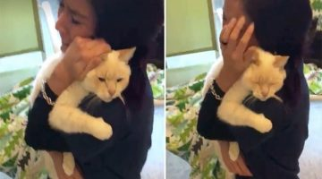 Woman Never Stopped Looking For Her Missing Cat. After 2 Years She Couldn't Believe It…