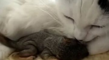Motherly Cat Chooses Baby Squirrels as Her Own