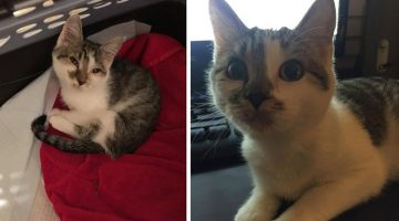 Sickly Kitty Rescued From Kill Shelter Gets a New Start