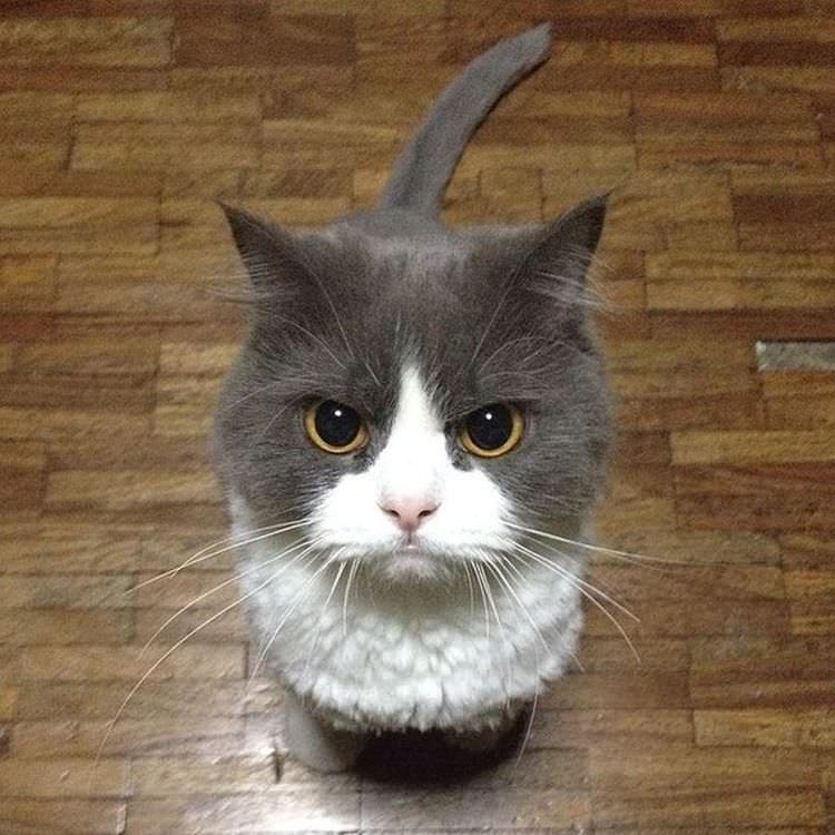 13 Super Villainous Cats with Incredibly Angry Faces | Top13