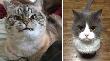 13 Super Villainous Cats with Incredibly Angry Faces