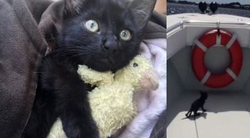 Kitten Rescued from Surf by Passing Deputy