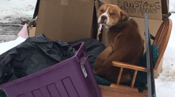 Dog Left Behind Like Trash Rescued from Cold