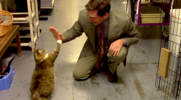 Animal Shelter Goes Viral with Hilarious Low-Budget Cat Commercial