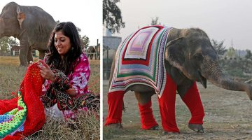 Indian Shelter Knitted Giant Sweaters For Their Rescue Elephants