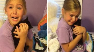 Little Girl Meets Kitten Doppelganger of Her Deceased Best Friend