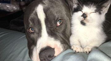 Kitten Missing Eyelids is Watched Over by Big Rescued Dog