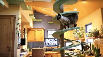 This Guy Transformed His Home Into The Most Amazing Kitty Playground