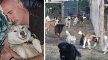 Man Builds 4-Acre Enclosure For His 45 Rescued Dogs So They Can Run Free