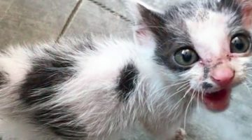Kitten Saved by Man Transforms as She Regains Her Health