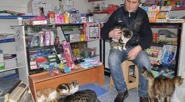 Shopkeeper Provides Sanctuary for Stray Cats in Harsh Winter