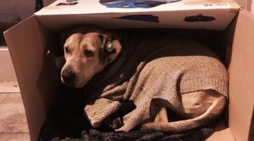 Good Samaritans Are Fitting These Cold, Stray Dogs With Blankets And Love