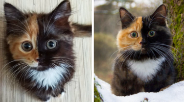 Meet Yana, the Cutest Kitty with a Two-Tone Face