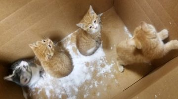 Kittens Rescued from Blizzard by Kind Woman