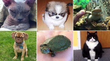 18 Of The Angriest Animals Ever