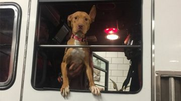 Firefighters Adopt Rescue Pit Bull That Was Left To Die