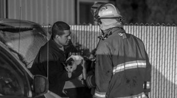 Heroic Cat Saves Its Family From A Fire By Biting Its Sleeping Owner