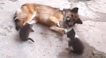 Cat Mom Introduces Her Kittens To An Unlikely Old Friend