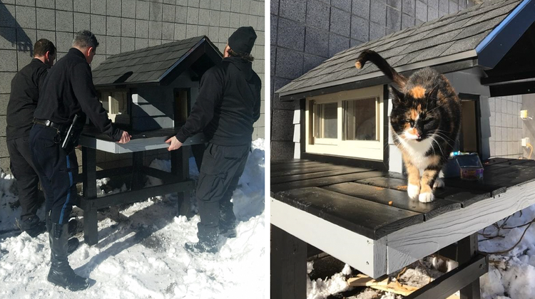 Police Officers Build Complimentary Home for Curious Cat