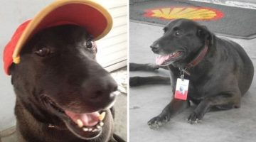 Stray Becomes Gas Station Guard Dog
