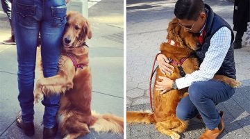 Golden Retriever Is NYC's Most Famous Hug-Giver Dog