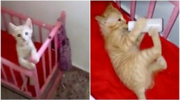 Tiny Kitty Runs To Her Crib And Wait When She Sees Mom Warming Her Bottle