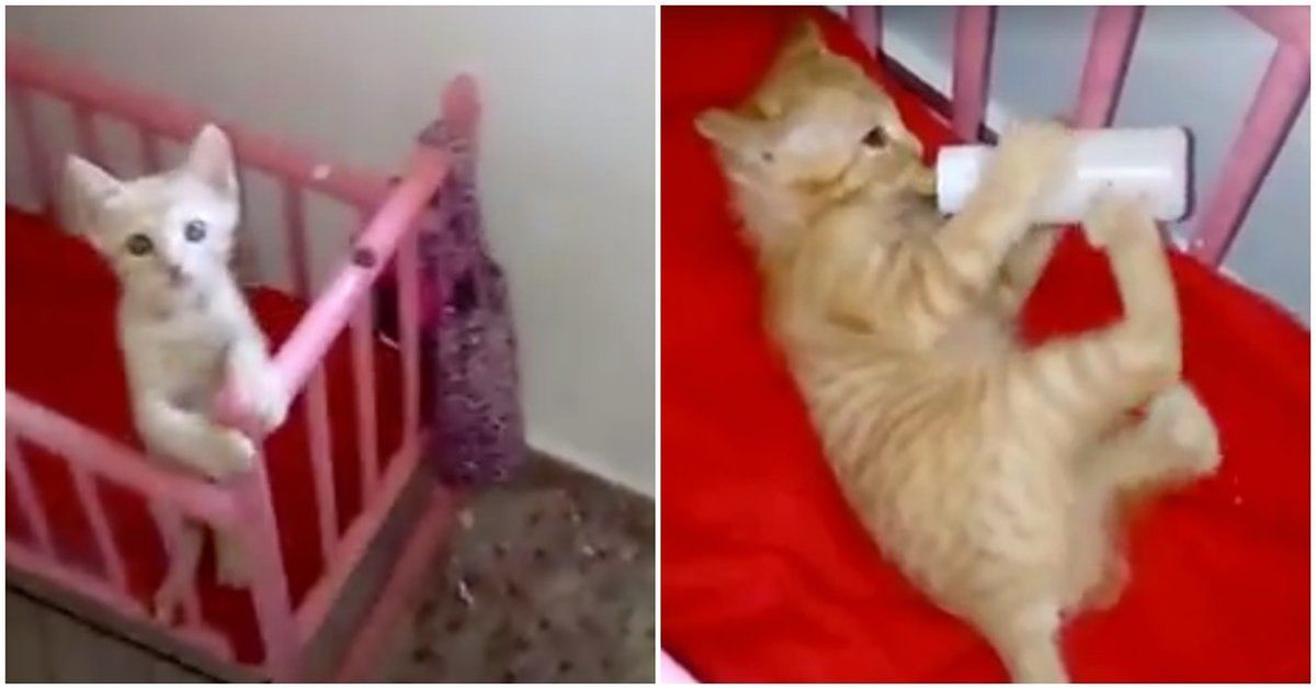 Tiny Kitty Runs To Her Crib And Waits When She Sees Mom