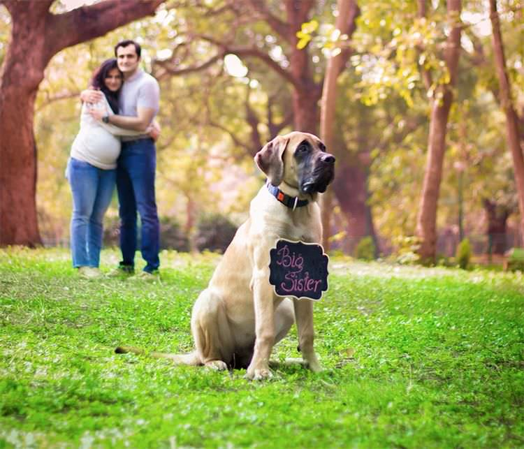 pregnant-couple-dogs-photoshoot-6