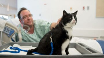 Therapy Cat Visits Hospital To Make All The Patients Feel Better
