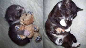 16 Before And After Pictures Of Pets Growing Up With Their Favorite Toy