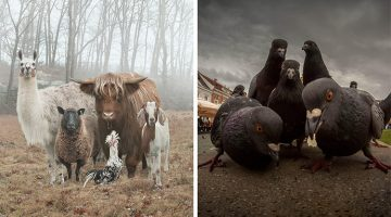 13 Badass Animal Pictures That Would Give Any Musician A Run For Their Money
