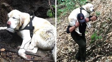 Blind Dog Missing For A Week In The Woods Is Saved By Firefighter
