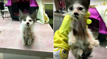 Sick Kitty Is Taken Into Foster Care. This Is How Love Changed Her Life!