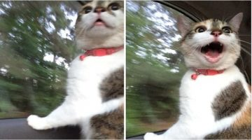 13 Tumblr Posts That Show Cats Are Just Perfect