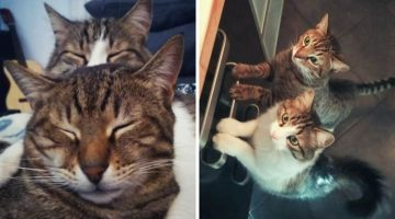 Cat Takes Care of Kitten Abandoned In Parking Lot, The Way He Thanked Him Will Melt Your Heart