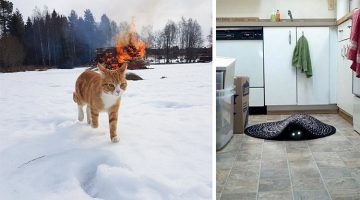 13 Photos That Show Cats Are Actually Demons