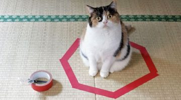 Science Cannot Explain Why Most Cats Cannot Resist Sitting in a Circle