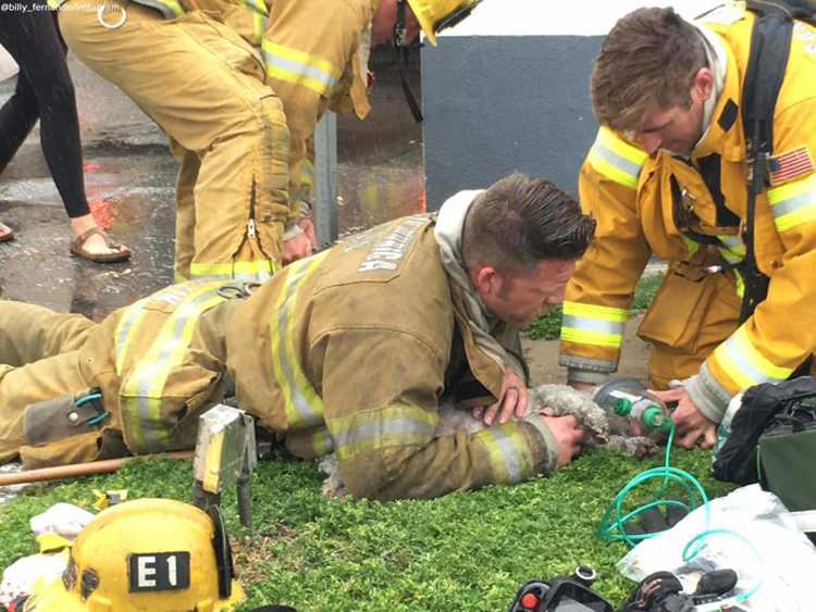 Firefighter Saves Dog S Life By Performing Cpr After