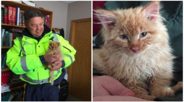 Frozen Kitten Mistaken For A Chunk Of Ice Is Rescued And Brought Back To Life